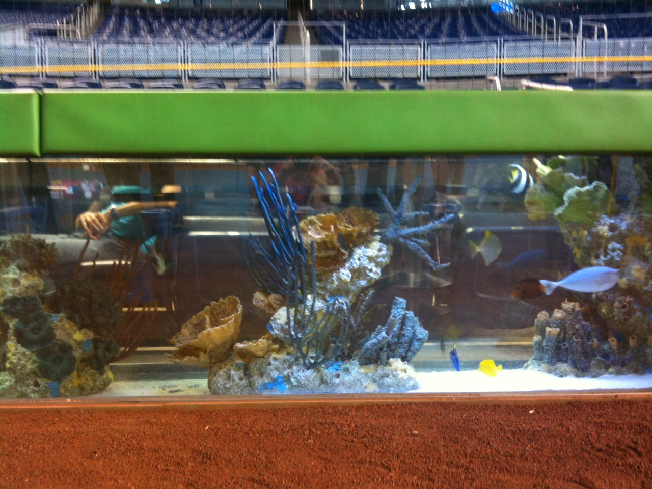 My amazing experience at marlins park matt 39 s bats for Marlins fish tank